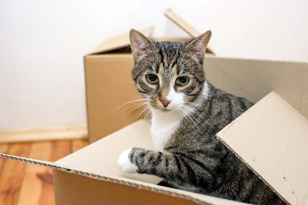 Moving homes with pets