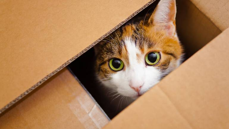 Ten Ways To Survive A Move With Pets