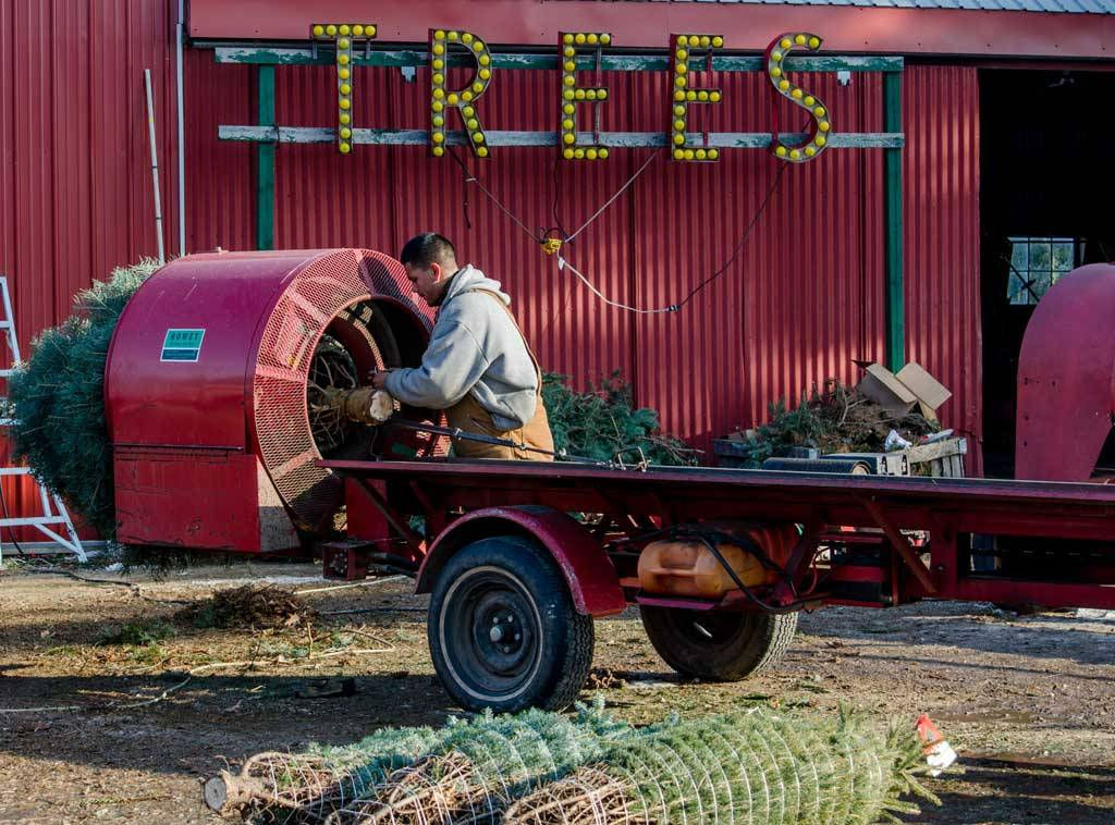lees summit area christmas tree farms